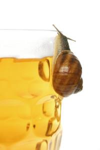 snail beer